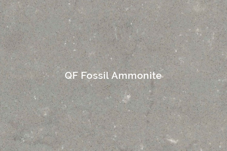 QF Fossil Ammonite