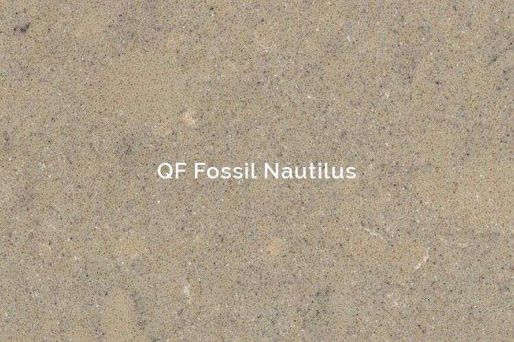 QF Fossil Nautilus