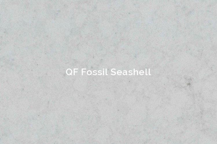 QF Fossil SeaShell
